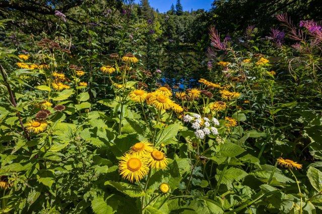 40% din speciile de plante sunt pe cale de dispariţie